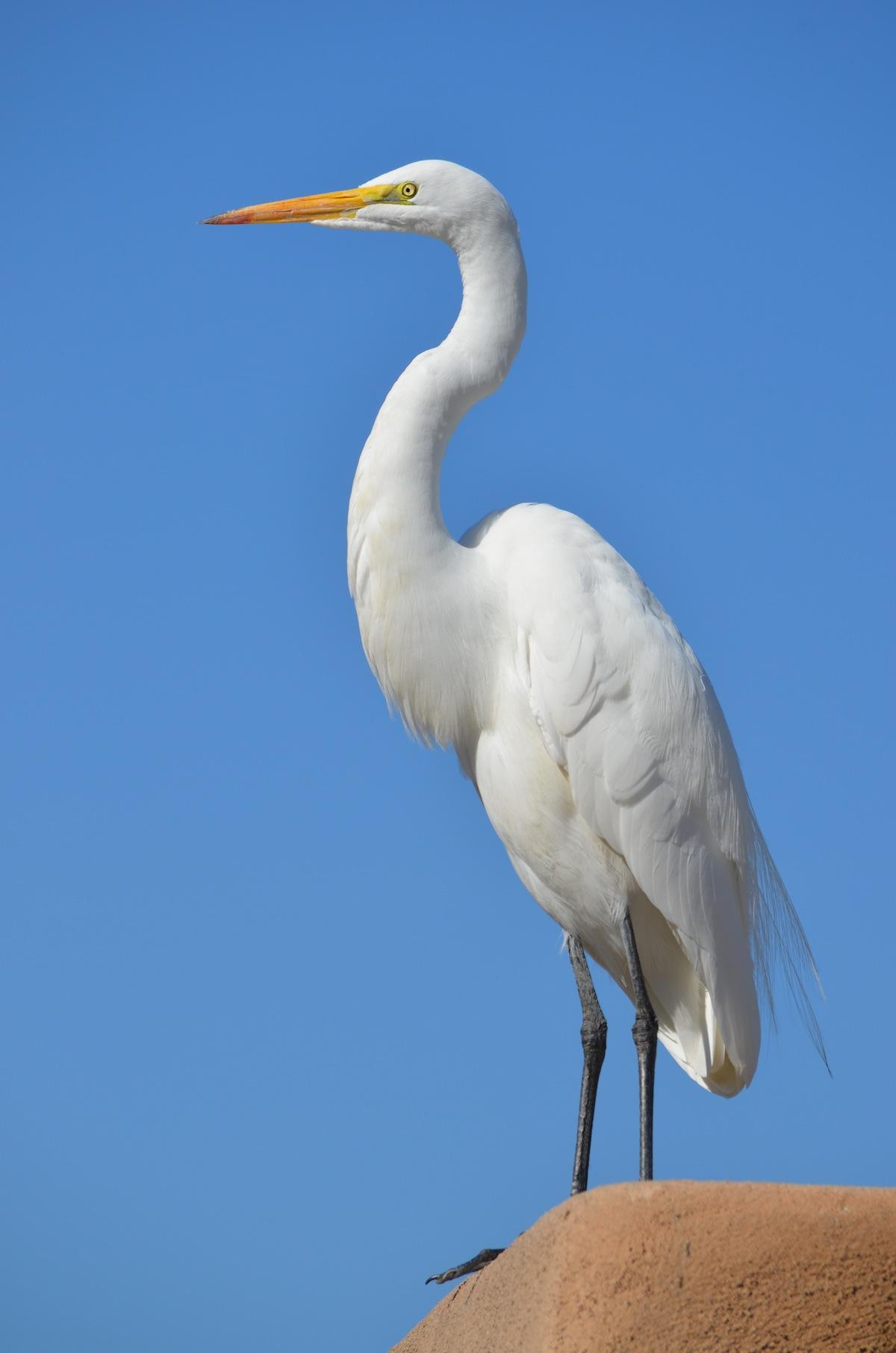 a white heron analysis essay